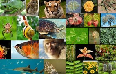 Pengertian dan Jenis-jenis Keanekaragaman Hayati (Biodiversitas)