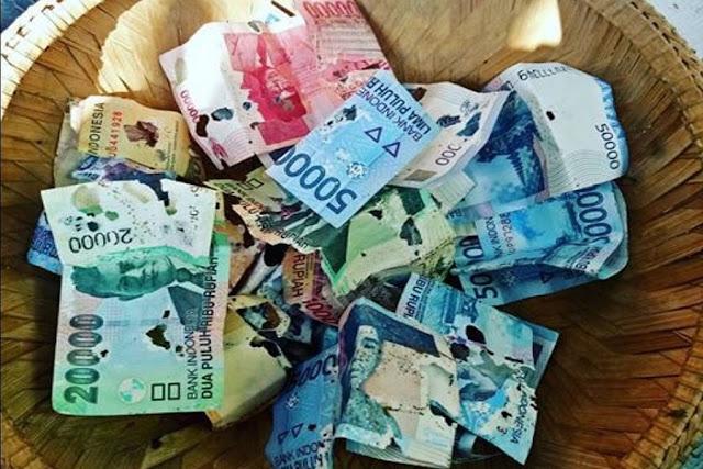 Uang Rusak Dimakan Rayap, ini Kriteria Uang Rusak yang Bisa Ditukar di Bank