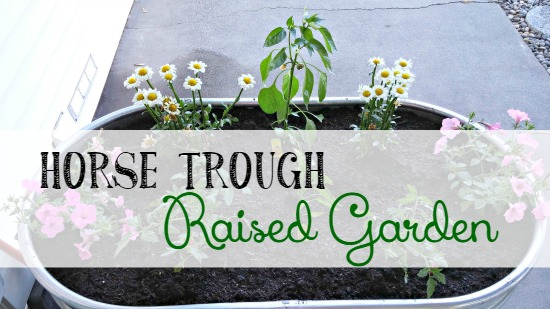 How to make a raised garden bed with a horse trough