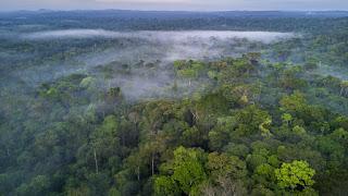 معنى التجول في الغابة  بالحلم