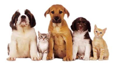 TLC Animal Shelter News