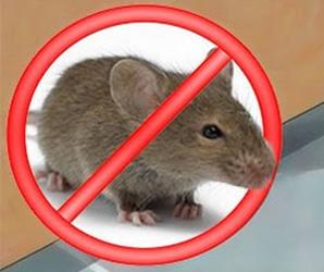 eliminar ratones ratas desratización sevilla