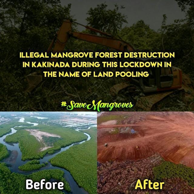 SAVE MADA FOREST