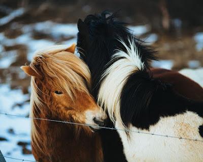 Cold Snow Winter Horses