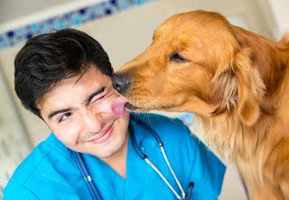 """El mensaje viral de un veterinario : """"Soy mal médico"""""""