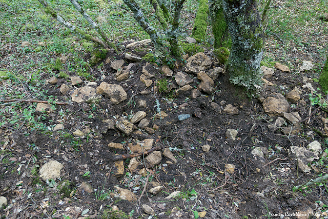 Hozadero de jabalíes y hacha neolítica