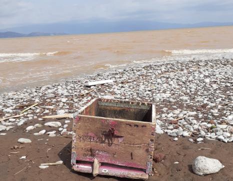 Εικόνες φρίκης στην Θεσσαλία χιλιάδες τα πνιγμένα μελίσσια