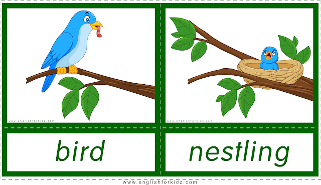 Animals and their babies -- bird - nestling -- printable flashcards