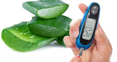 L'Aloe Arborescens contro il diabete, rimedio da non sottovalutare