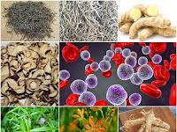 Membuat Ramuan Herbal untuk Atasi Leukemia (Kanker Darah) dari Prof. H.M. Hembing Wijayakusuma