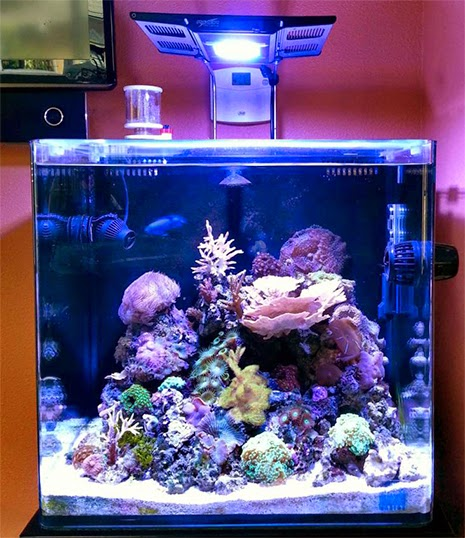 11 inspirational innovative marine nuvo aquariums marine for Micro fish tank