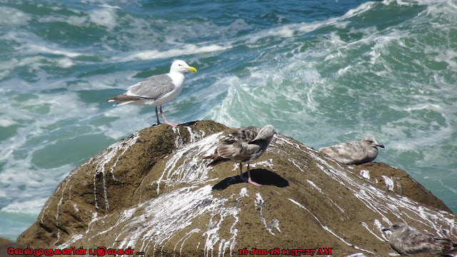 Oregon Depoe Bay Seabirds Watching