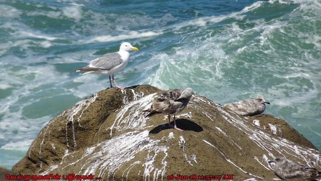 Oregon Depoe Bay Seabirds Watching
