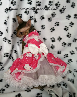 Coco the Cornish Rex in a Hello Kitty Dress