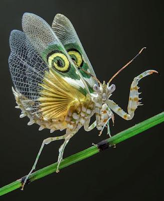 Hewan Aneh Yang Hidup di Bumi dan Berwajah Alien
