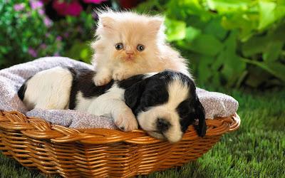 cuty-cat-baby-with-dog-sleeping