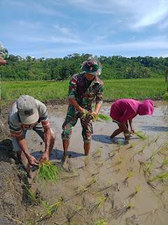 Satgas Pamtas Yonif R 142/KJ Tanam Padi Bersama Masyarakat di Desa Tohe