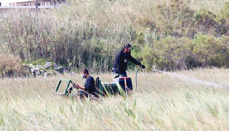 Τρόμος στην Κρήτη: Θα είναι ένα δύσκολο το φετινό καλοκαίρι με τα κουνούπια