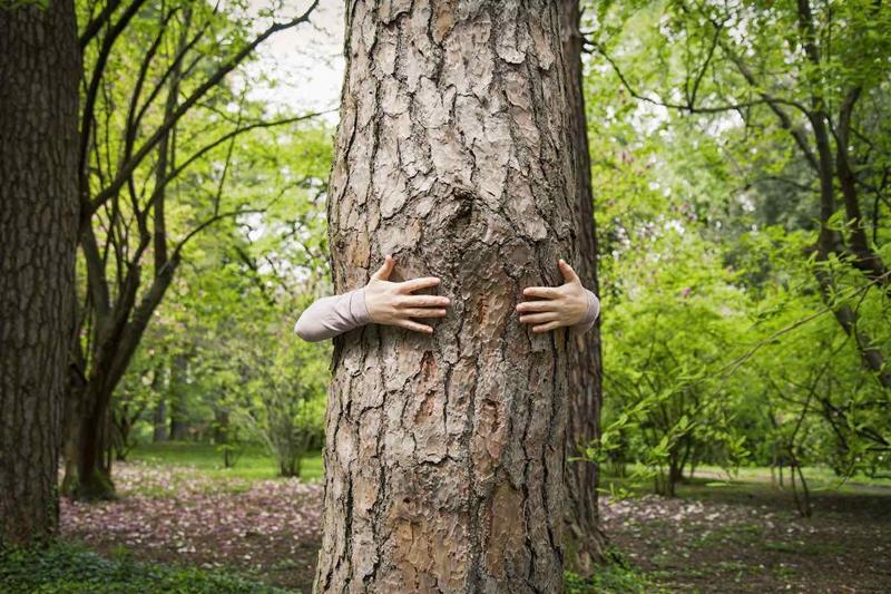 Ağaca Sarılın, Zıplayın