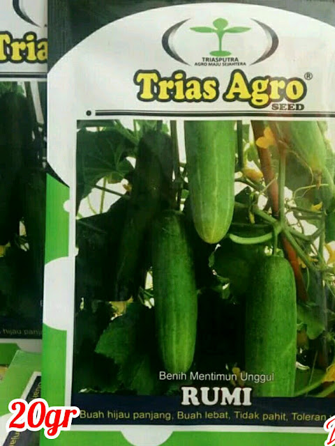 Benih Mentimun Hijau Unggul RUMI Produk Trias Agro Seed