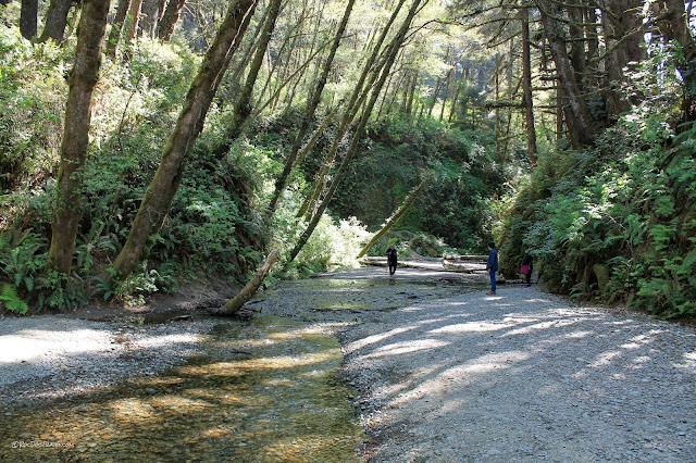 California northern coast geology travel trip roadtrip Humboldt Redwoods copyright RocDocTravel.com