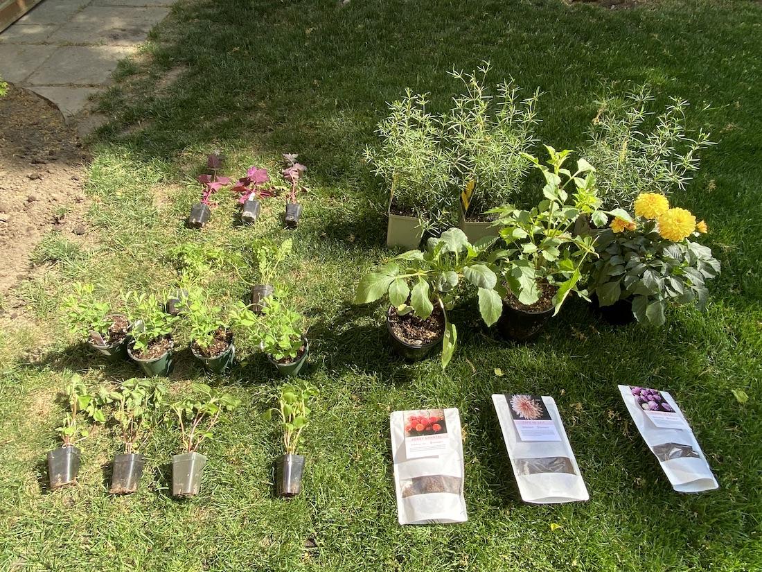 cutting garden plants