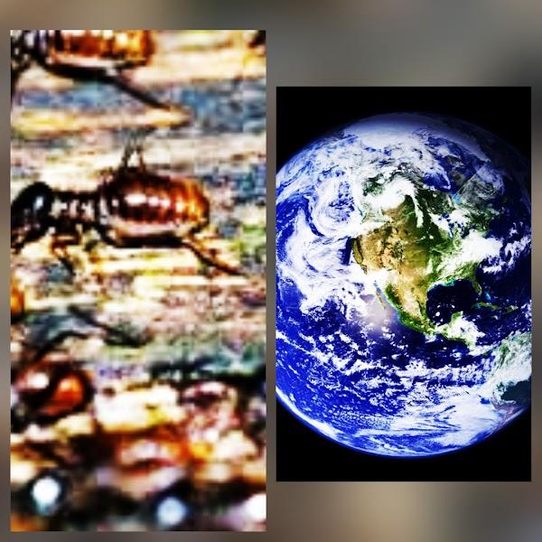 Científicos alertan que los insectos desaparecerán de la Tierra, con consecuencias catastróficas para nuestro planeta.