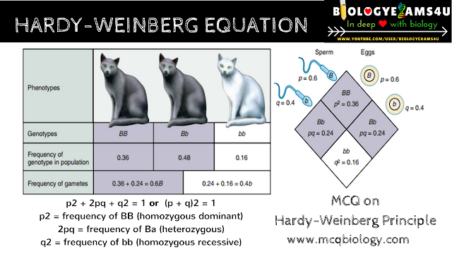 MCQ on Population Genetics - Hardy Weinberg Equilibrium