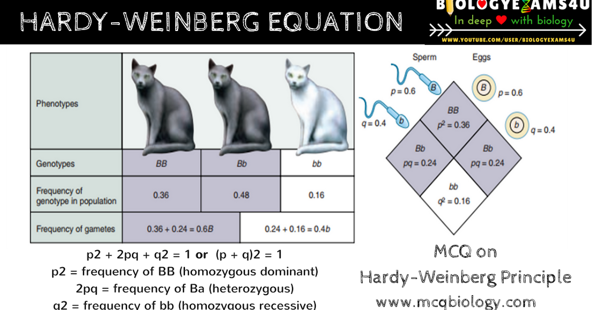 Mcq On Population Genetics Hardy Weinberg Equilibrium Problems