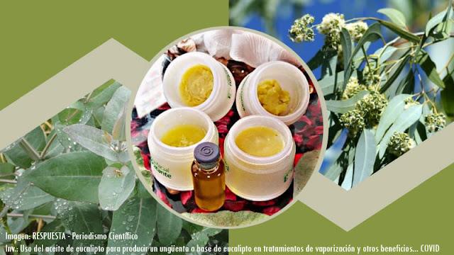 Uso del aceite de eucalipto para producir un ungüento a base de eucalipto en tratamientos de vaporización y otros beneficios en tiempos de covid-19