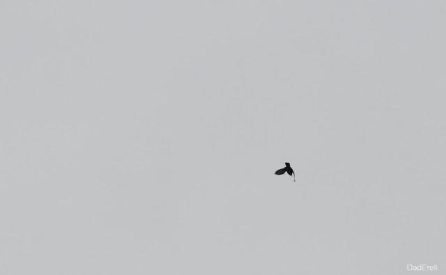Un corbeau dans le vent