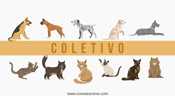 Coletivo de cães e gatos