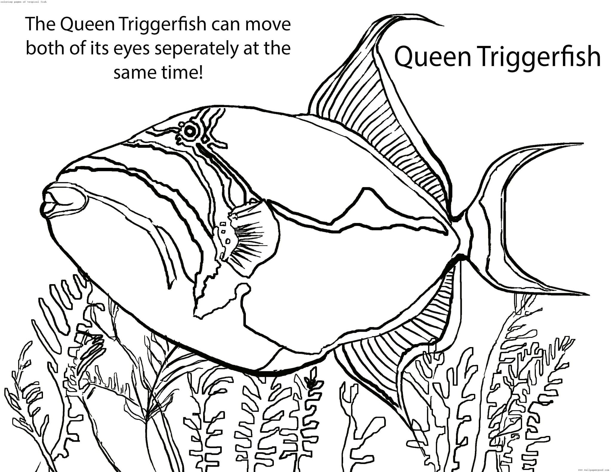 coloring pages of tropical fish