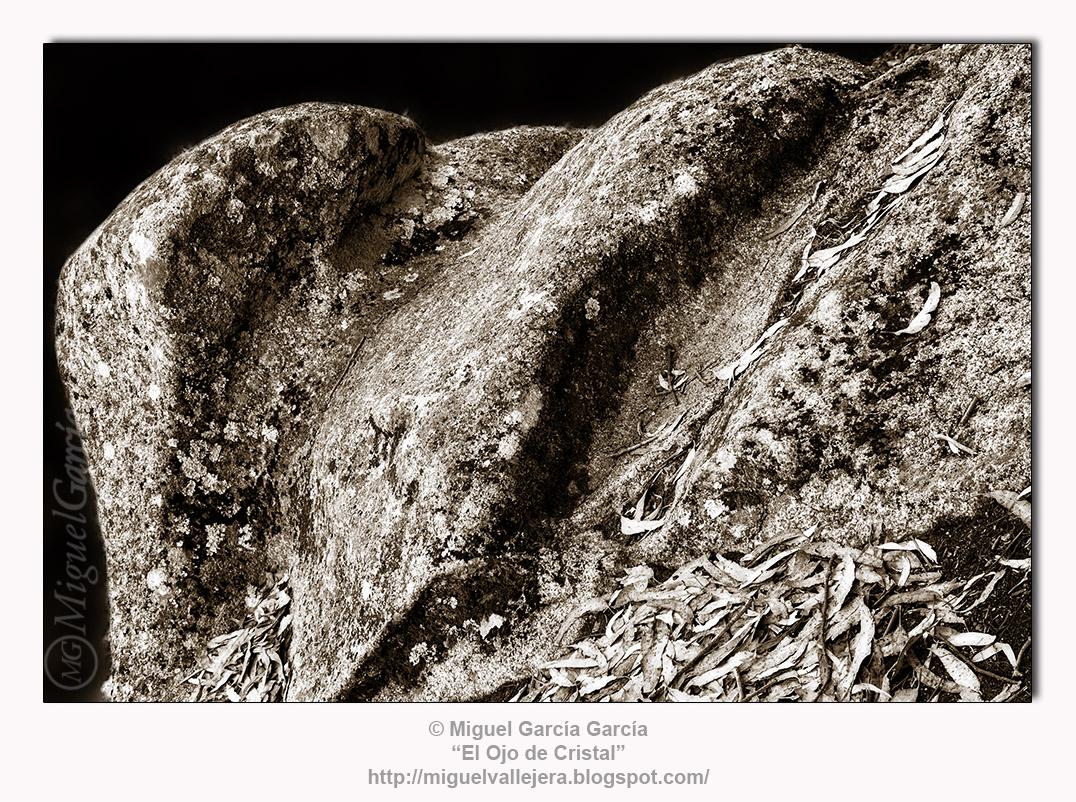 Rocas (Gelatina de Plata)