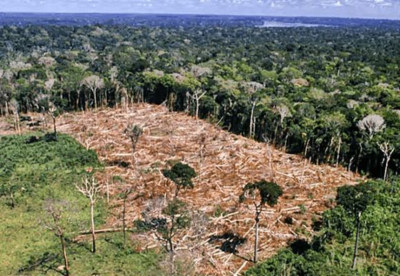 Promessas-acabar-desmatamentos