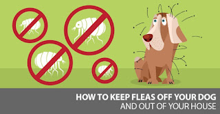 Ticks On Dogs, How Does Flea Medicine work, Pet Flea and Tick Control For Dogs That Works The Best