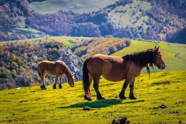 España, Navarra, Pirineo