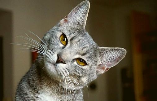 8 methodes pour garder votre chat en bonne santé