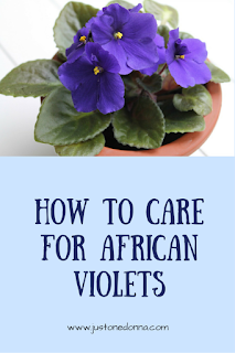 It's easy to Grow and care for African violets with these seven tips.