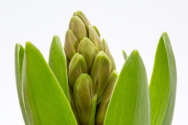pemanfaatan tanaman eceng gondok