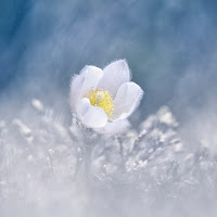 https://reflexphotoblog.blogspot.com/p/a-laffiche-du-mois-de-juin-2019.html