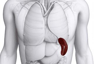 Spleen- Normal, Abnormal  & Scanning Anatomy
