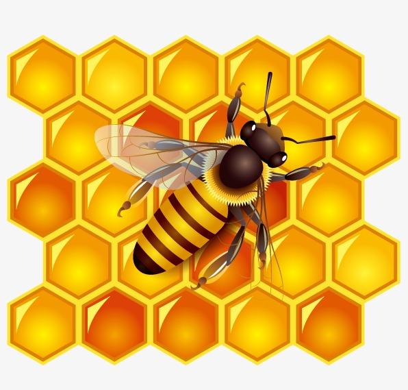 كيف تتحكم هرمونات ملكة خلية النحل بسلوك الآخرين ؟
