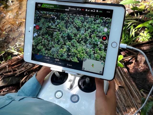 Evaluación de rodales naturales y plantaciones de bambú usando drones en las regiones de San Martín y Loreto, Perú