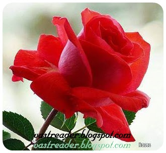 Roses in all colour, Roses in Multicolour, Mutlicolour Roses, Red Roses, White Roses, Blue Roses, Green Roses, Rose Colour Roses, Roses Photos, Roses Images, Roses Collection, Roses Stills, Roses pictures, .Jpg Roses, .Jpeg Roses, .gif Roses, .png Roses, .gif Roses, Roses image Download, Free Roses images Download
