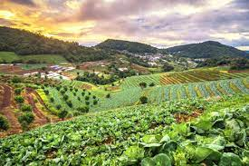 Why is sustainable agriculture so important to us?