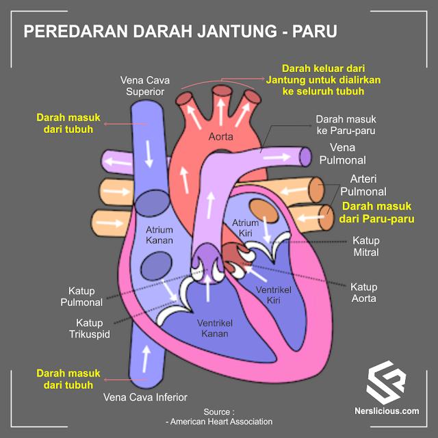 proses tekanan darah dan aliran darah