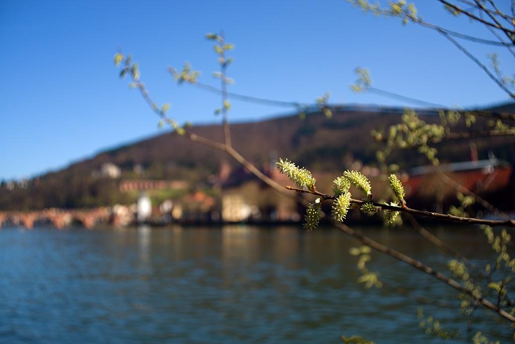 #110-1 Retina-Curtar-Xenon f5.6 35mm – Frühlingsblüher