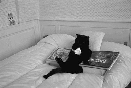 cb 4 - 10 Gatos pretos lendo livros