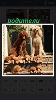 на ступеньках сидят две собаки в качестве родителей и внизу много щенков